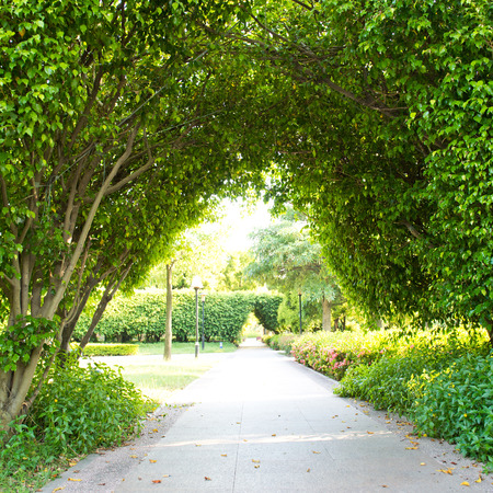 Green archway in the park at summer.