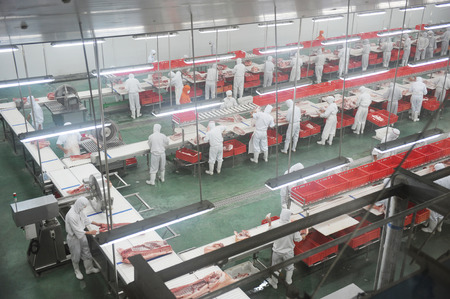 factory farm: group of workers working in pork industry plant. Editorial