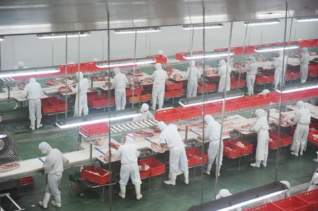 돼지 고기 산업 공장 라인에서 일하는 근로자의 그룹입니다.