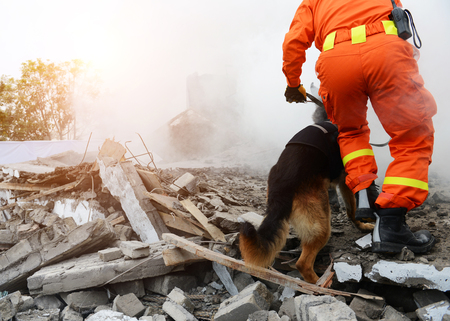 Search and rescue forces search through a destroyed building with the help of rescue dogs. Imagens - 75091367