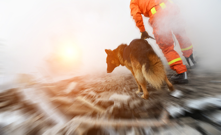 Poszukiwania i siły ratownicze przeszukują zniszczony budynek przy pomocy psów ratowniczych.
