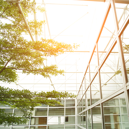 Office building and green tree, business concept
