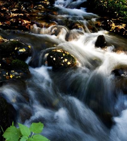 environmen: Field of a mountain stream