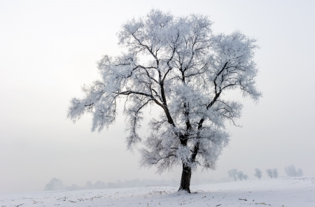 snowlandscape: Trees in frost and landscape in snow against blue sky  Winter scene  Stock Photo