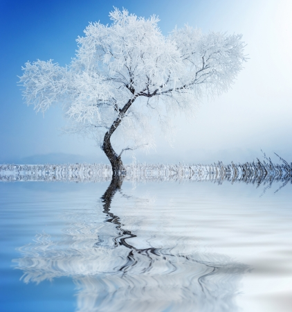 snowlandscape: Trees in frost and landscape in snow against blue sky. Winter scene. Stock Photo