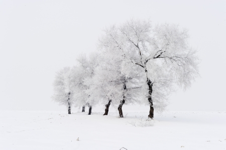 snowscape: Trees in frost and landscape in snow against blue sky. Winter scene. Stock Photo