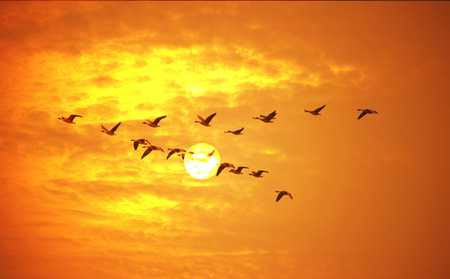 Vliegende vogels tegen oranje zonsondergang. Stockfoto