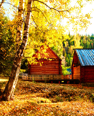 birch grove and wooden  house  in the autumn Stock Photo