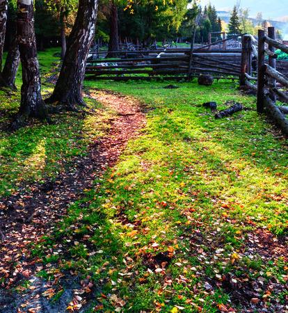 arboleda: abedul bosque en oto�o
