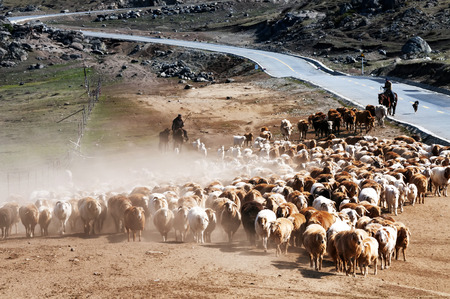 landscape of sheep at the countryside  photo