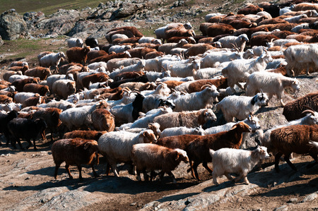 nomadism: Flocks of change garments according to the migration