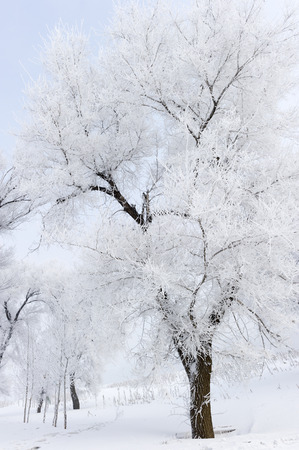 Trees in frost and landscape in snow against blue sky. Winter scene. Stock Photo