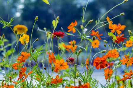beautiful flowers: Beautiful spring flowers Stock Photo