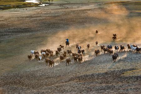 Bashang of Inner Mongolia horse farm