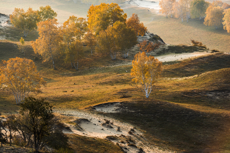 Autumn grazing scenery on Bashang Grassland in Wulanbutong Reklamní fotografie