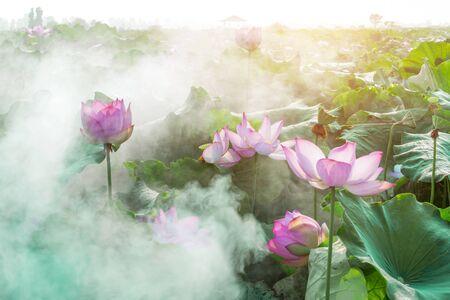 fleur de lotus Banque d'images