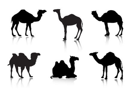 beelden van een kameel van een reeks silhouet tes. Dieren.