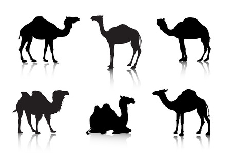 camello: im�genes de un camello de un siluetas de serie. Animales.  Vectores
