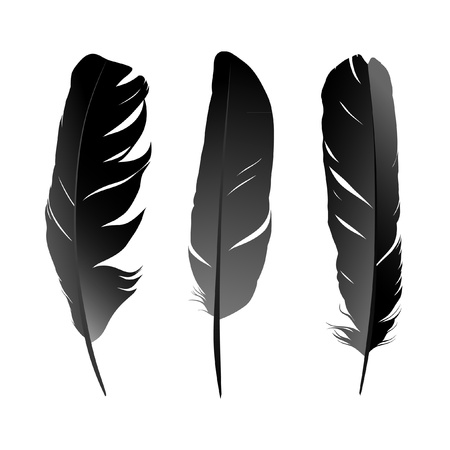 quill pen: Vector set of black birds feather on white background