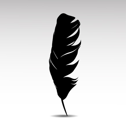 Feather on white background vectr Vector