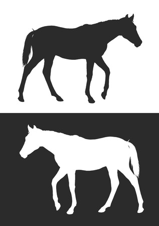 horse vector: realistic silhouette young horse, vector illustration, black and white
