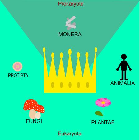 The five kingdom (biology)
