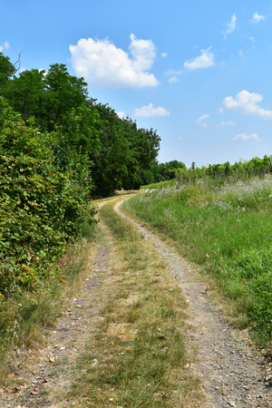 A rural road into the nature with blue sky in the background