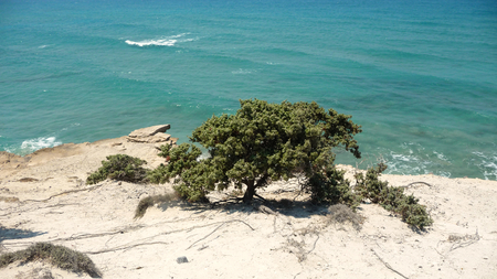 A green tree grows in a white cliff near turquoise sea Stock Photo