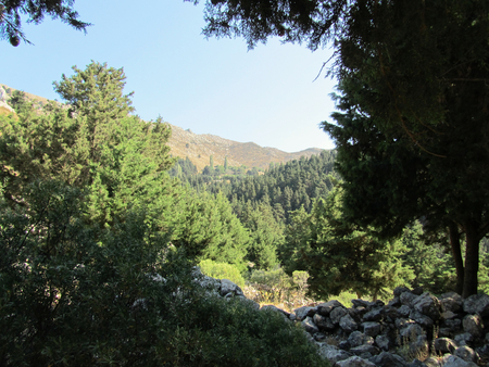 Countryside with pines in mountains in Kos island, Greece