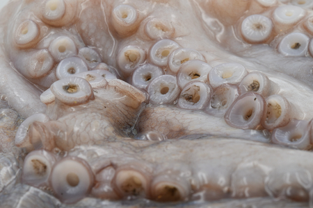 close up of raw big octopus with long tentacles Stock Photo