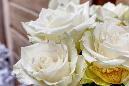 Close up background of beautiful white roses. HDR effect.