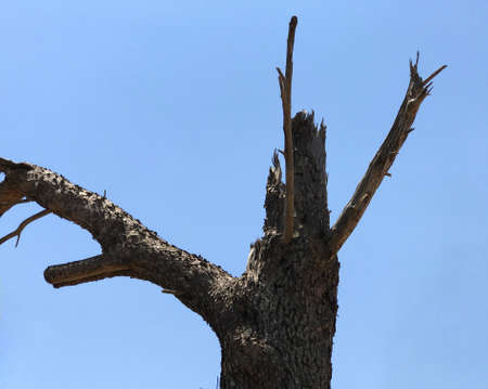 A death tree on blue sky in a sunny day. Suitable to be used like a background.