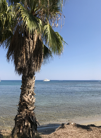 A big palm on a shore with limpid sea and blue sky in the background.