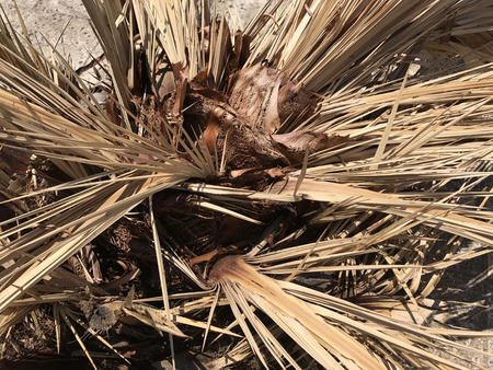 Close up of dry palm leaves. Suitable to be used like a background.