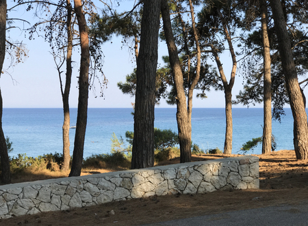 The pine forest of Skala in the island of Kefalonia, Greece. Blue sea in the background.