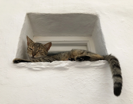 A tigerskin cat on a window in a white stone house.