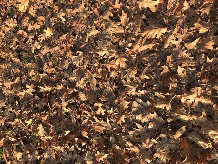 background of dry leaves in fall season