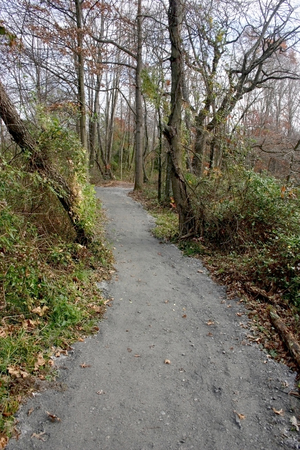 Path for walks among trees in the forest