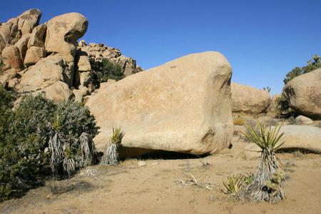 Rock Climb Joshua Tree Big Rocks Yucca Brevifolia Mojave Desert Joshua Tree National Park California