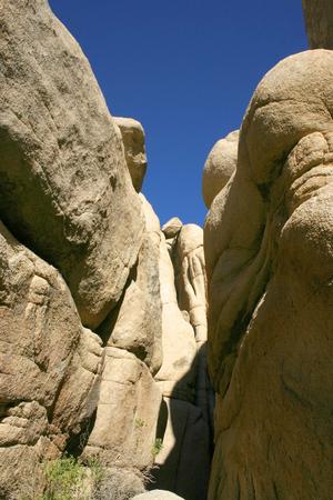 Mojave Desert; Joshua Tree National Park; California