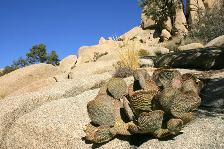 Rock Climb Hidden Valley Big Rocks Prickly Pear Cactus Mojave Desert Joshua Tree National Park, California