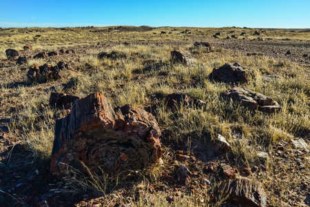 The trunks of petrified trees, multi-colored crystals of minerals. Petrified Forest National Park, Arizona Stock Photo