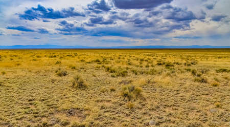 Yellow Prairie from Desert Plants, Great Sand Dunes National Park with mountains in the background, Colorado, USA 版權商用圖片