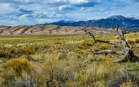 Dry tree on the background of the Great Sand Dunes, Colorado, USA Foto de archivo