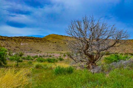 Solitary drought tolerant trees, desert plants, and cacti in a natural hillside landscape in Utah, USA