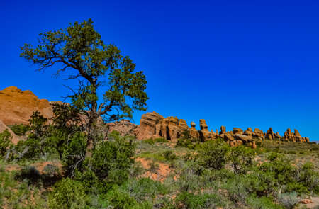 A tree on the background of an Eroded landscape, Arches National Park, Moab, Utah, USA 스톡 콘텐츠