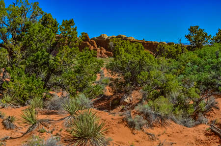 Trees in the background of an Eroded landscape, Arches National Park, Moab, Utah, USA