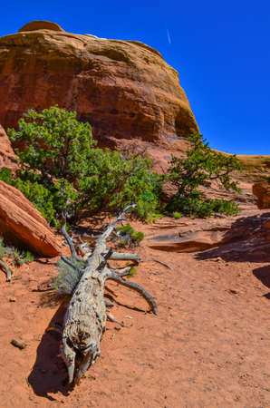 Dry tree against the background of an Eroded landscape, Arches National Park, Moab, Utah, USA
