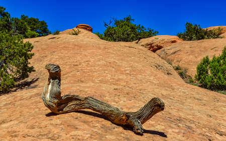 Dry tree trunk against the background of an erosional landscape, Arches National Park, Moab, Utah, USA