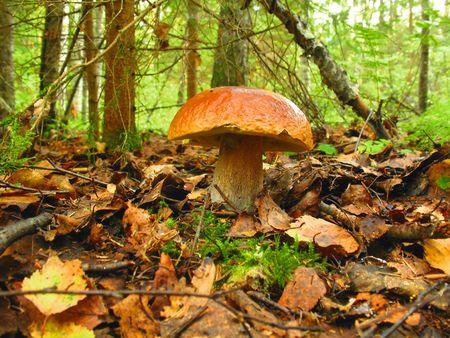mushrooming: mushroom